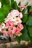 Flor y hoja verde Foto de archivo libre de regalías