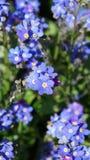 Flor y hojas azules Fotos de archivo