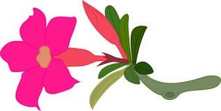 Flor y hojas de la adenina Fotos de archivo