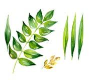 Flor y hojas de la margarita ilustración del vector