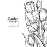 Flor y hojas del tulipán que dibujan la frontera Marco floral grabado dibujado mano del vector stock de ilustración
