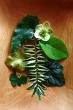 Flor y hojas en un regalo. Fotografía de archivo libre de regalías