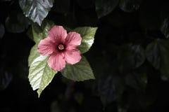 Flor y hojas rojas Imagen de archivo libre de regalías
