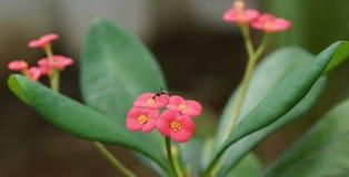 Flor y hormiga Imagen de archivo libre de regalías
