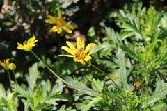 Flor y la abeja Fotos de archivo