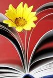 Flor y libro imagen de archivo libre de regalías