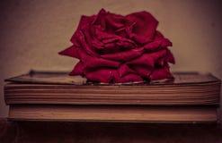 Flor y libro Imágenes de archivo libres de regalías