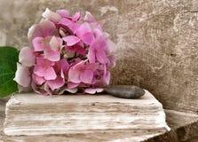 Flor y libro viejo imágenes de archivo libres de regalías