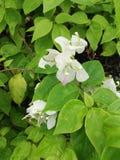 Flor y licencia Fotos de archivo libres de regalías