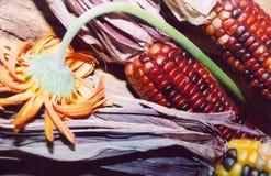 Flor y maíz Imágenes de archivo libres de regalías