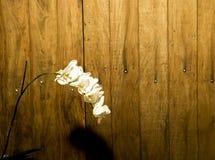 Flor y madera Imágenes de archivo libres de regalías