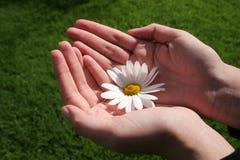 Flor y mano Imagen de archivo libre de regalías