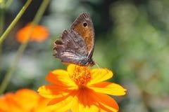 Flor y mariposa Imagen de archivo libre de regalías