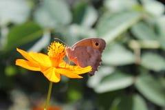 Flor y mariposa Imagen de archivo