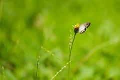 Flor y mariposa Fotografía de archivo libre de regalías