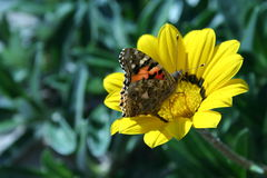 Flor y mariposa Imagenes de archivo