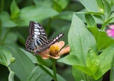 Flor y mariposa Fotos de archivo libres de regalías