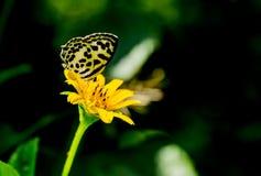 Flor y mariposa amarillas Imagenes de archivo