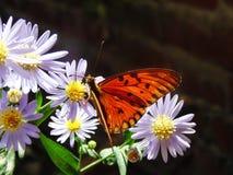 Flor y mariposa azules imágenes de archivo libres de regalías