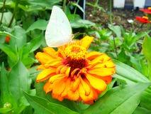Flor y mariposa después de la lluvia Fotos de archivo