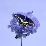 Flor y mariposa púrpuras Imagen de archivo