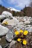 Flor y montañas Fotografía de archivo