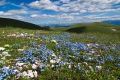Flor y montañas - Campo Imperatore foto de archivo