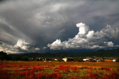 Flor y nube Imagen de archivo libre de regalías