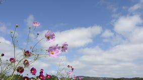 Flor y nubes del cosmos almacen de metraje de vídeo