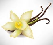 Flor y palillos de la vainilla Imagen de archivo