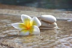 Flor y piedras en balneario del hotel Imágenes de archivo libres de regalías