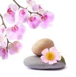 Flor y piedras en un backg aislado blanco Fotografía de archivo libre de regalías