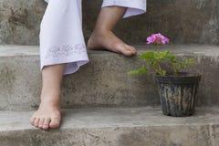 Flor y pies rosáceos de Cranesbill del geranio foto de archivo libre de regalías