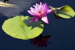 Flor y pista del lirio fotos de archivo