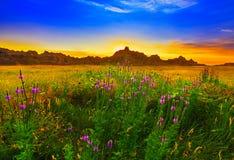 Flor y puesta del sol Fotos de archivo