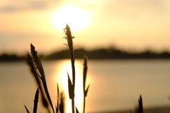 Flor y puesta del sol Fotografía de archivo libre de regalías