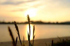 Flor y puesta del sol Imágenes de archivo libres de regalías