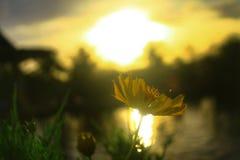 Flor y puesta del sol Imagen de archivo