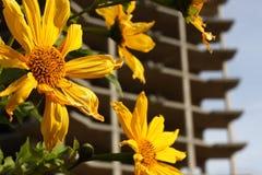 Flor y ruina Imágenes de archivo libres de regalías