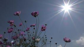Flor y sol del cosmos metrajes