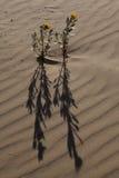 Flor y sombra Fotos de archivo