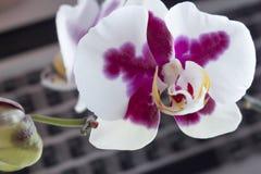 Flor y teclado Fotos de archivo libres de regalías