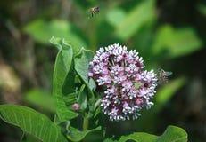 Flor y tres abejas Imagenes de archivo