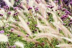 Flor y trigo Fotos de archivo libres de regalías