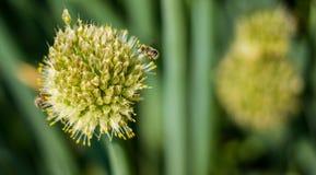Flor y una abeja Imagen de archivo