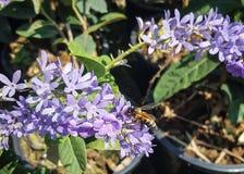 Flor y una abeja grande Fotos de archivo libres de regalías