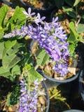 Flor y una abeja grande Foto de archivo