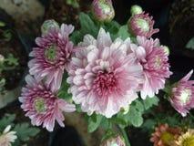 flora Imagem de Stock