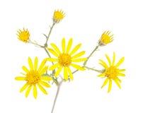 Flora Stock Photo