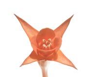 Flora Fotos de archivo libres de regalías